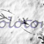 foto-fine-art-antoniolotorto.com-milano-orme-neve-epson-fotoprint